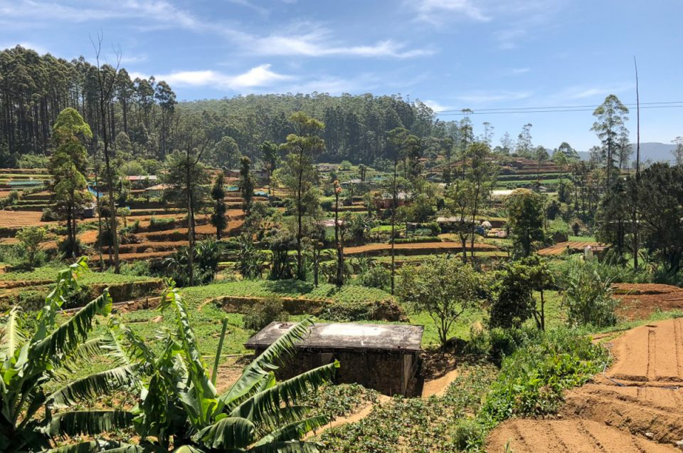 Sri Lanka – Nuwara Eliya